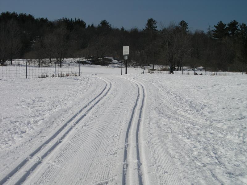 Skiing1