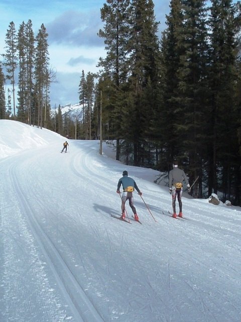 Picture or the trails at teh Canmore Nordic Centre